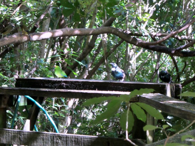 Birds at the water trough, Wattle Track