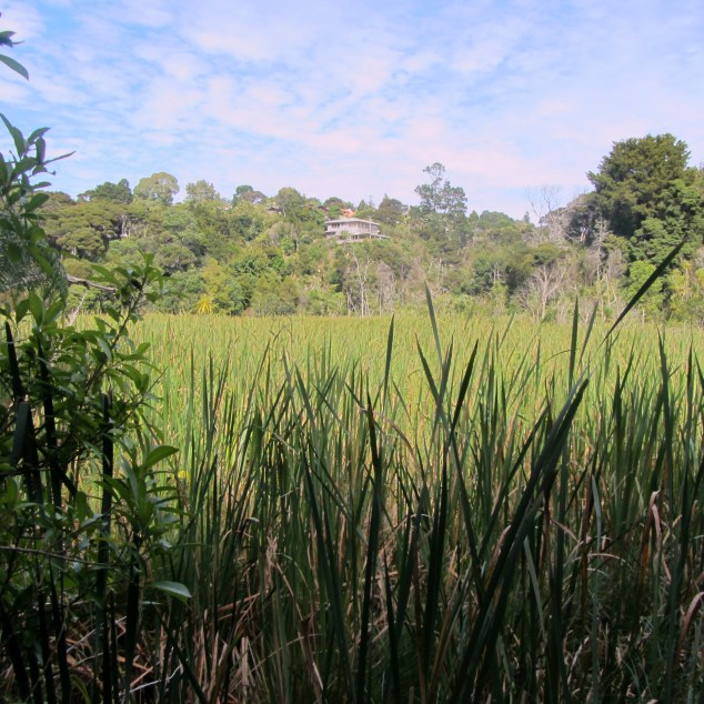 Le Roys bush walk
