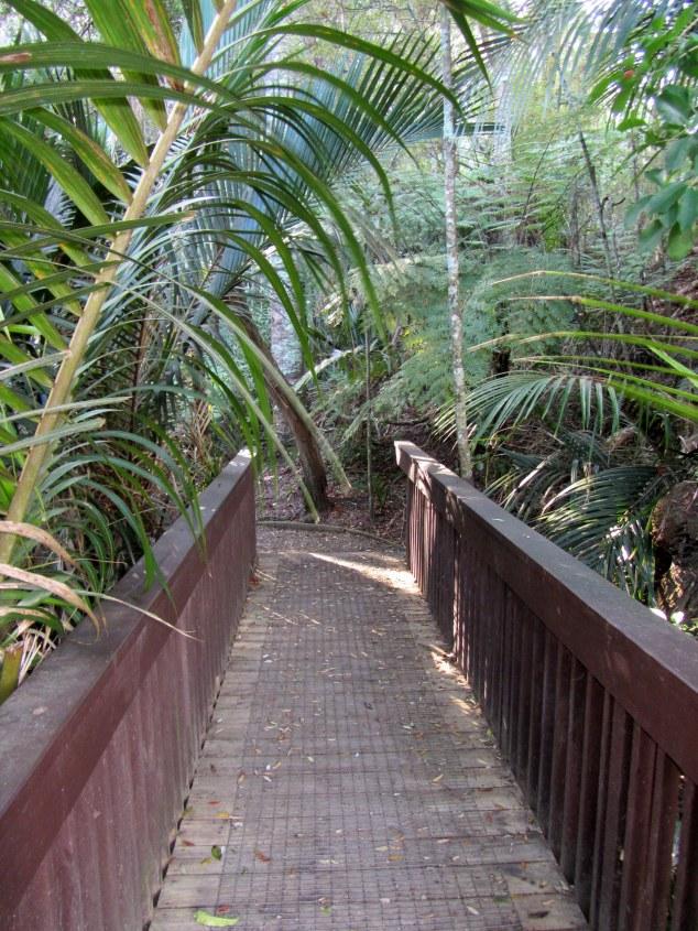 Alice Eaves Scenic Reserve