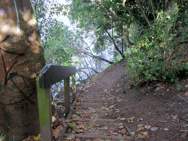 I take the steps down to track to the Orakei Boat Ramp