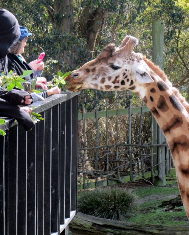 Zoo keeper talks