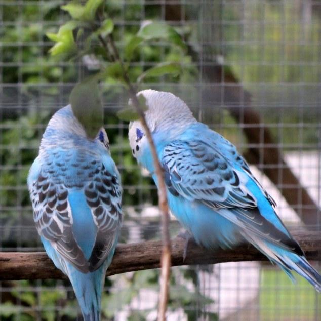 Aviary, Parana Park