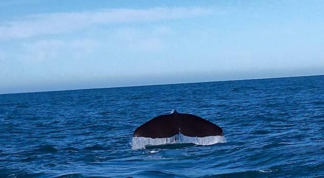 WhaleWatch2