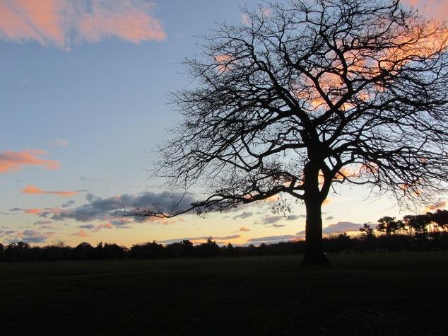Hagley Park at sunset