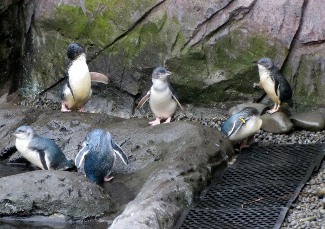 Little Blue Penguin Enclosure